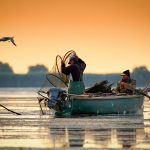 Danube Delta, Romania, June 2017: fishermans checking nests at s