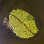 Danube Delta vegetation as seen from above aerial view